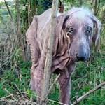 """""""Kidobják őket a nagypapa kabátjával együtt"""" – épül az első kutya-öregekotthona"""