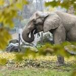 Sokkal több állatnak születtek utódai egy mexikói rezervátumban, mióta nincsenek látogatók