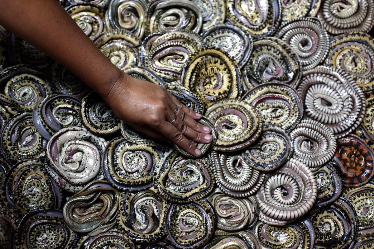 Fotó: Így dolgoznak a kígyóvágóhídon