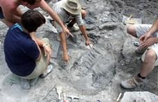 Magyar kutatók vizsgálták a dinoszauruszok viselkedését, érdekes eredményre jutottak