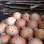 Nyüvektől hemzsegő tojásokat foglalt le a Nébih - videó