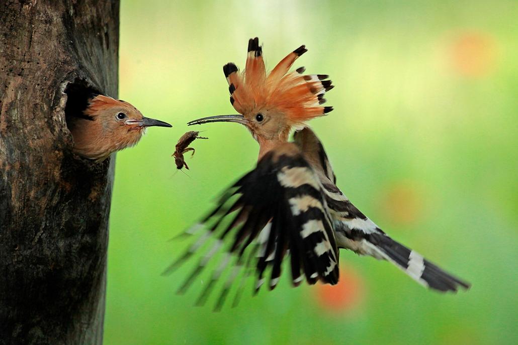 Egyszer használható az év természetfotósai díj nyertes fotói