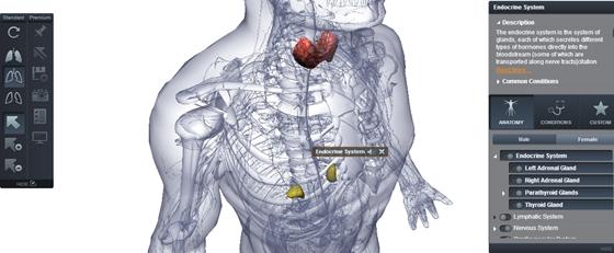 emberi anatómia nézet)