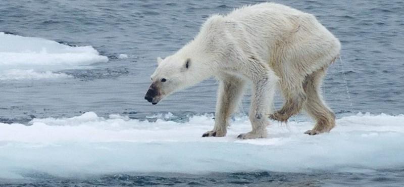 Megrázó fotó, ami után ön sem legyint majd a globális felmelegedésre