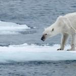 Minden repülőjárat lecsíp a jegesmedvék otthonából