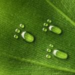 Ha ezeket betartja, felére csökkentheti ökológiai lábnyomát