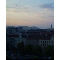 Bécsi