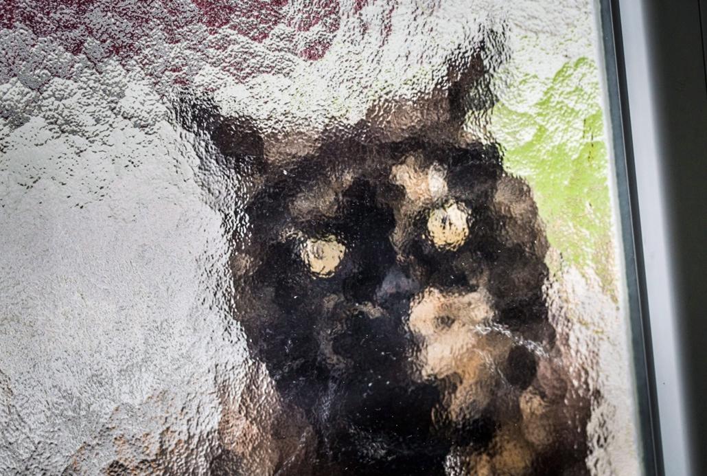 epa. hét képei - Frankfurti életkép 2014.11.03. Egy macska várja egy frankfurti lakás üvegajtaja mögül, hogy beengedjék 2014. november 3-án.