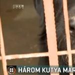 Három kutya támadt egy járókelőre Bátaszéken, kezét, lábát harapdálták az állatok