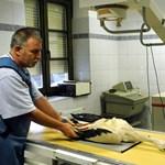 Változnának az állatorvosi kamara törvényei