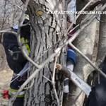 Tűzoltóknak kellett kimenteniük egy fába szorult kislányt – videó