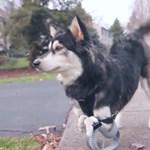 Szívszorító videó egy kutyáról és a 3D nyomtatásról