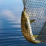 Kiváltják a drága horgászengedélyt, mégsem pecázhatnak