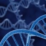 A géneken múlik, hogy figyelemhiányos lesz-e valaki