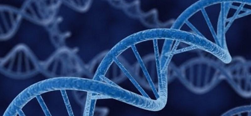 Magyar kutatók új gént azonosítottak egy ritka betegség kialakulásának hátterében