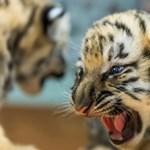 """Kívülről nézhették az állatkertet a fogyatékkal élők, mert """"csak"""" hatósági igazolványuk volt"""