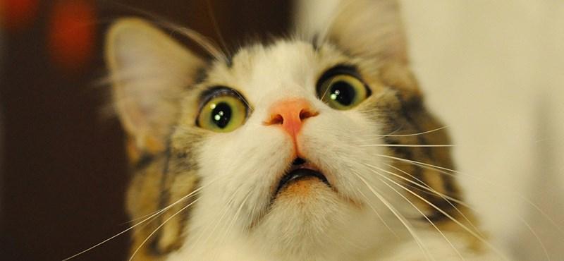 Macskáknak készült bolha- és kullancsirtókat buktatott le a Nébih