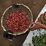 Mélyponton a kávé ára, de ennek nem mindenki örül