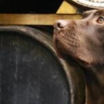 A sör, a gazdik és a kutyák