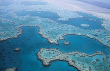 Ön is segíthet megmenteni a korallzátonyt, erre a színre figyeljen