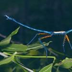 Sosem látott, 20 centis rovarokra bukkantak a kutatók