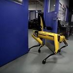 Még visszahúzni sem lehet a robotkutyát: ha nagyon akar, ő márpedig átmegy az ajtón