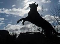 A Belvárosban elkezdték komolyan venni a kutyák kitiltását parkokból, játszóterekről