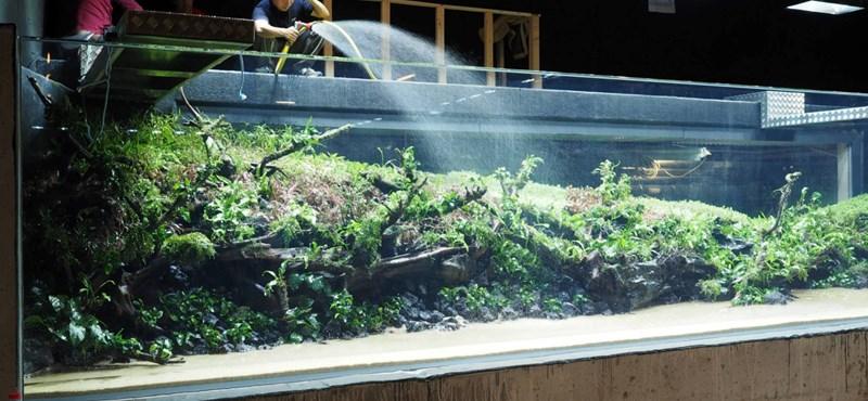 Így néz ki a világ leghatalmasabb őserdei akváriuma