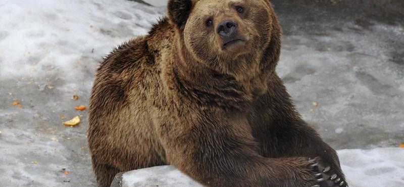 Néhány nap és nyit a budapesti állatkert