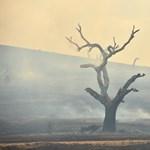 Sikerült végre megfékezni a tüzeket Ausztrália Új-Dél-Wales államában