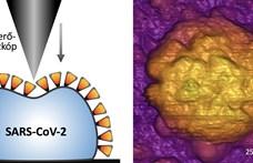 Magyar kutatók: Megvan, miért lehet ennyire fertőző a koronavírus