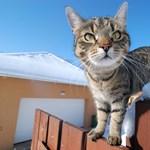 Egy cicáról posztolt véletlenül az amerikai közmédia, és most mindenki őt akarja