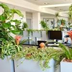 Miért jó, ha van zöld minősítése egy irodaháznak?