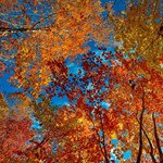 Fagyos éjjel után kellemes őszi nap következik
