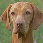 Utcára kerülhetnek a kutyák az ebadó miatt