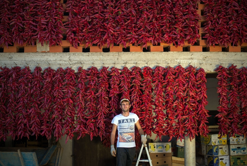 "afp. hét képei - Donja LOKOSNICA, Szerbia, 2014.10.01. paprikatermés, A farmer poses near his threads of red paprika in the village of Donja Lokosnica, near the city of Leskovac, Southern Serbia, on October 1, 2014. Donja Lokosnica is the Serbian ""capital"