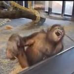 Ezt a videót nem lehet kibírni nevetés nélkül