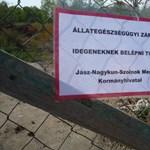 Tiszaföldvári sertéshorror: Megúszhatják a börtönt a vétkesek?