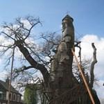 Ezeréves tölgyfa köré épült templom Franciaországban