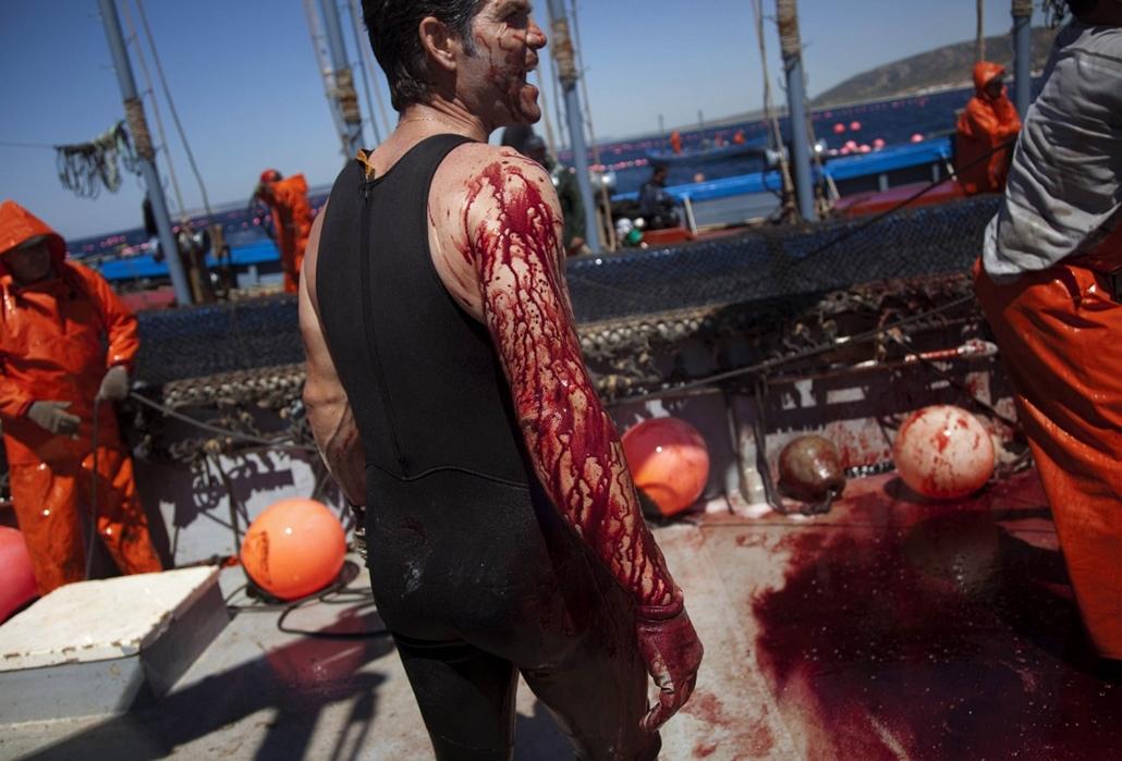 A vérfürdőtől a shusi bárig - Nagyítás-fotógaléria