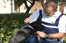 A motorja után kötve vonszolta kutyáját egy zempléni férfi