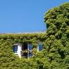 Bécsben kötelező lesz növényekkel beültetni az épületek homlokzatát