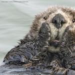 Kiválasztották az év legviccesebb állatos fotóit