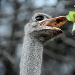 Kifutó madár: mi maradt a kilencvenes évek álombizniszéből?