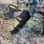 Elásott női holttestet találtak egy ház kertjében Öreglakon