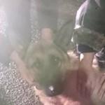 Petárda roncsolhatta szét egy szolnoki kutya mancsát