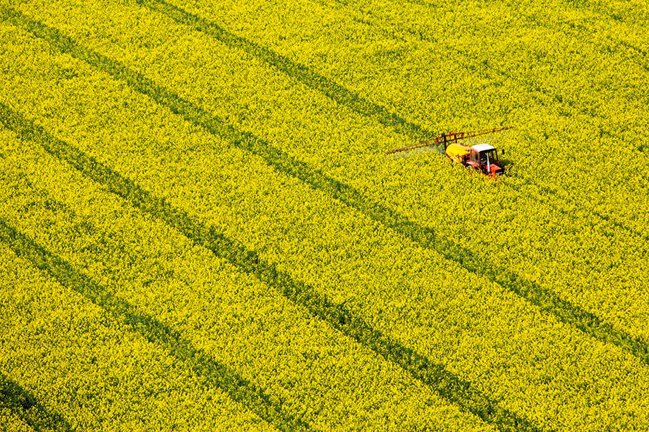Légifotó: Hatalmas táblákban virágzik a repce