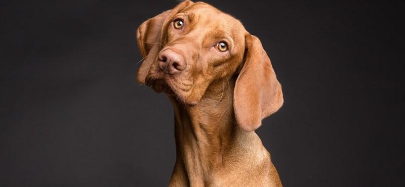 Ha kutyát fogadna örökbe, itt egy kis segítség