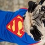 Fotók: szuperkutya és cilinderes macska az állatok karneválján