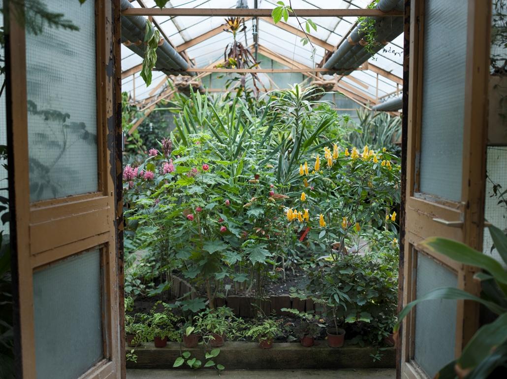 Urbán Ádám, csak nagyításhoz, botanikus kert